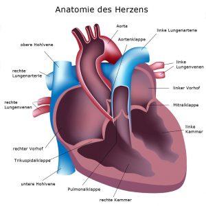 Testformen Cardio-Scan